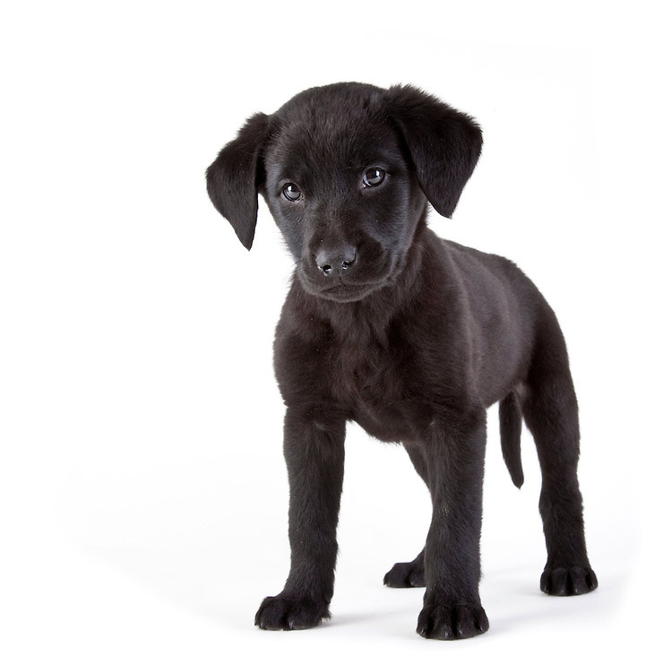Hank & the Kingdom Dog