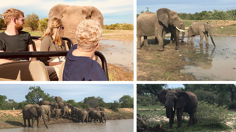 A South African game drive experience