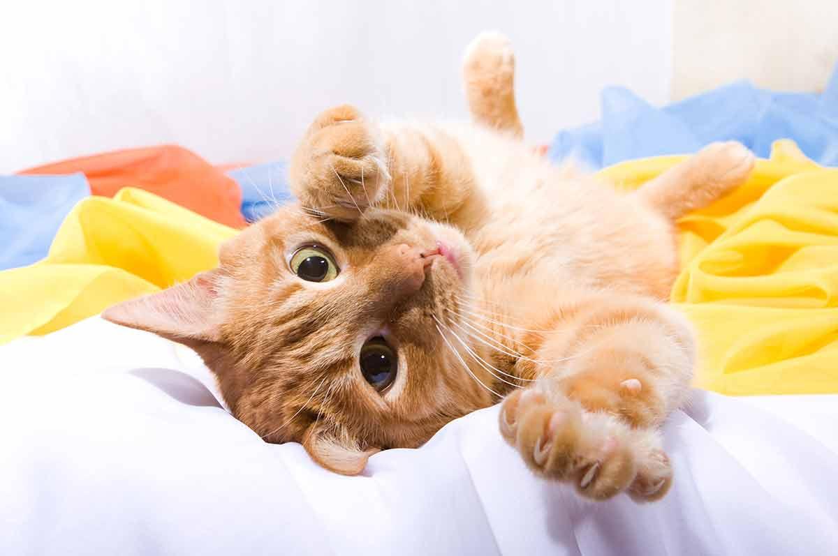 An orange cat reaching out toward the viewer.