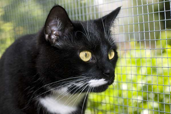 A cat watching the world from an an enclosure.