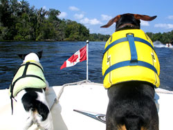 Two dogs wearing life jackets on a boat with a Canadian Flag.