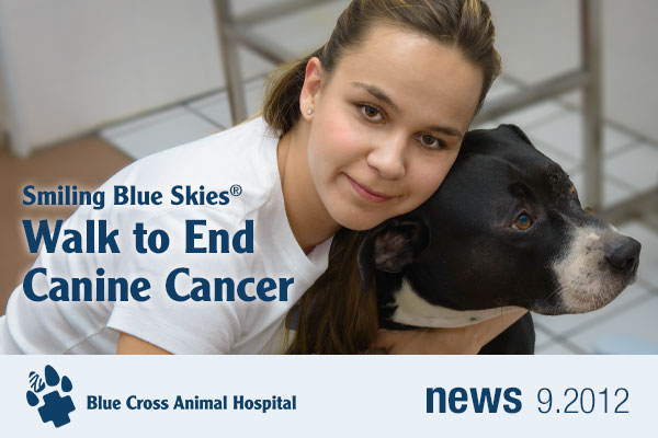 Nejra and Trigger ready to Walk to End Canine Cancer