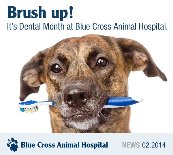 A dog holding a toothbrush in his mouth.