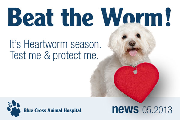 Beat the Worm! It's Heartworm season. Test me and protect me.