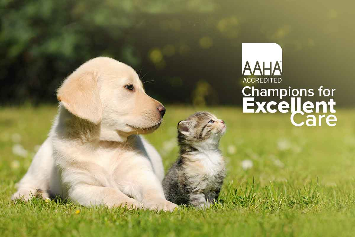 """A puppy and kitten looking at the AAHA """"Champions"""" logo."""