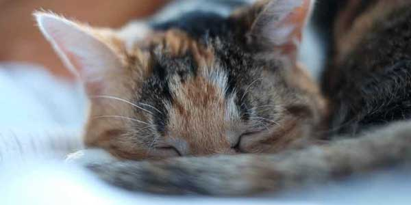 A sleeping cat--one of our patients.