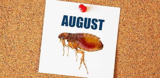 An August Calendar with a flea on it.