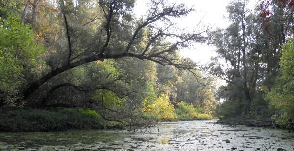 Lône de Taponas, Saône (département du Rhône) Crédit photo FCEN