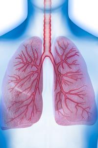 Lunge des menschlichen Körpers