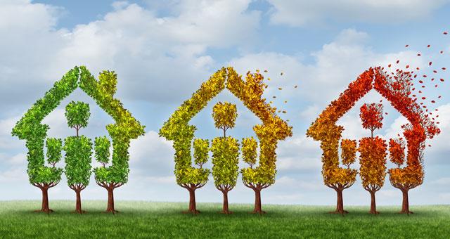 Baumhäuser in herbstlichen Farben