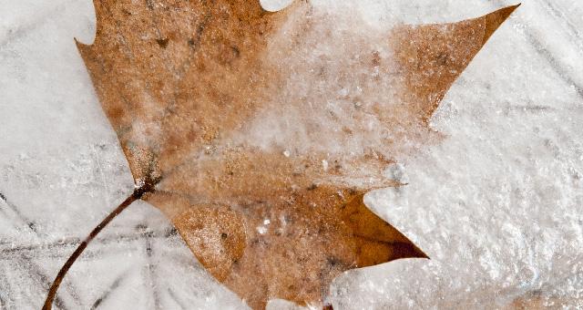 gefrorenes Baumblatt