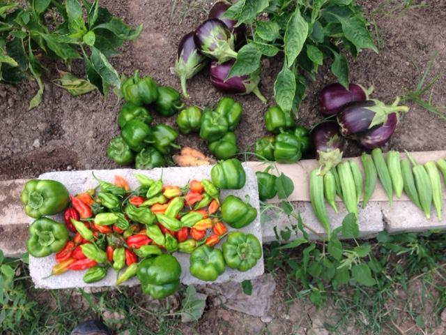 Aqua Produce.png