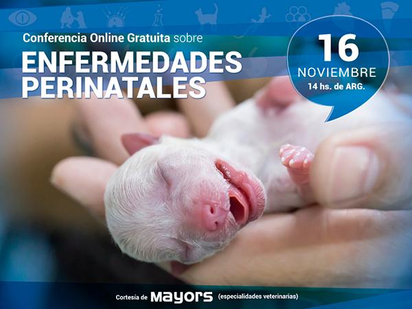 Conferencia para veterinarios sobre Enfermedades Perinatales