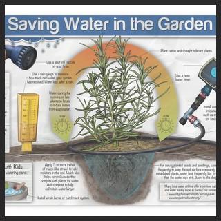 Saving Water in the Garden