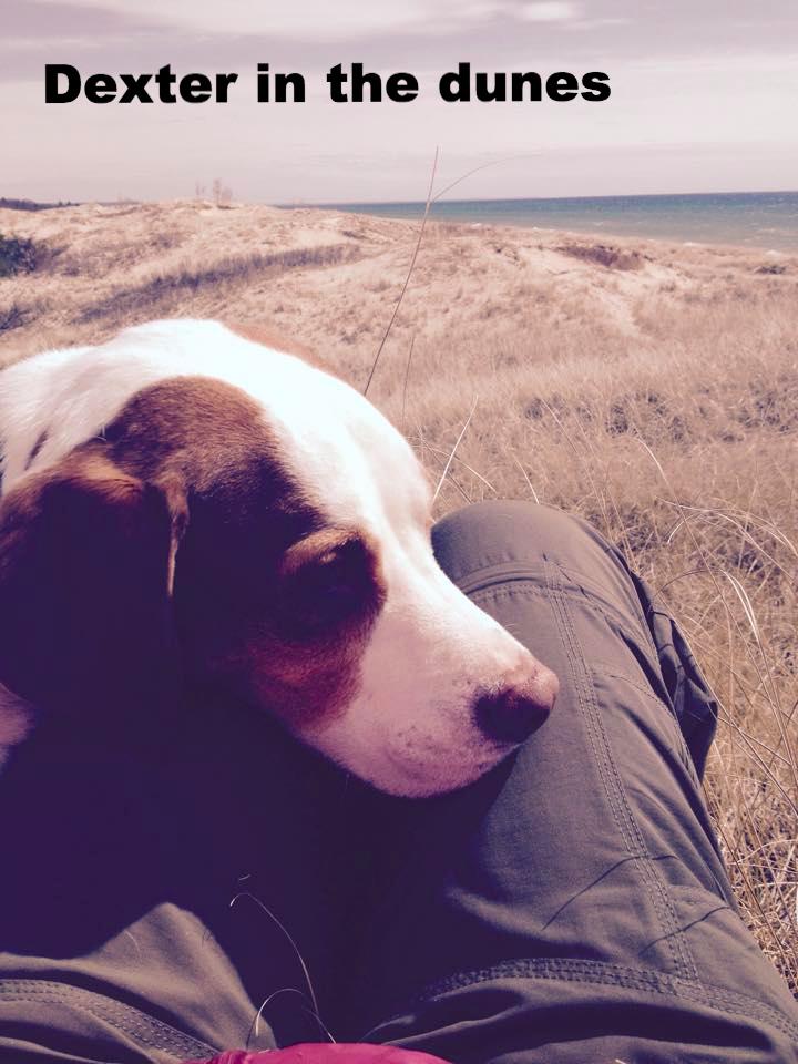 Dexter the dog takes a break
