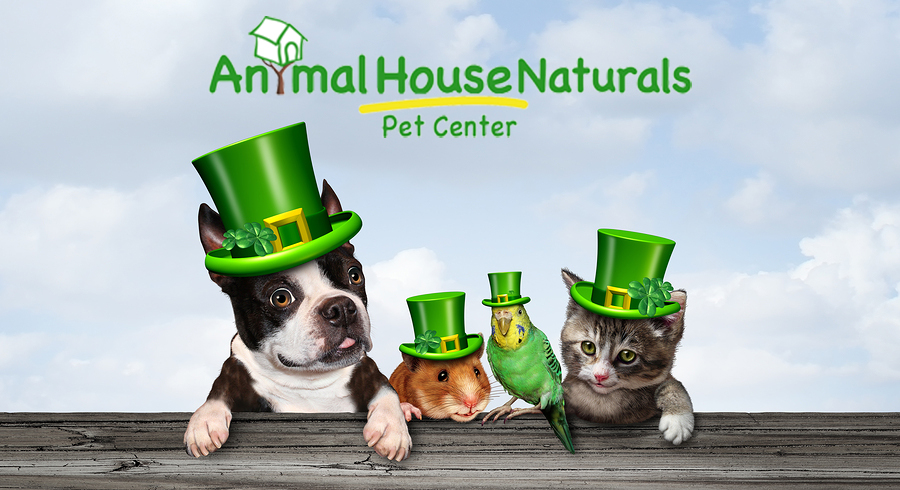 Festive animals in St. Patricks day gear.