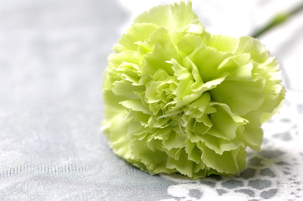 Shop Green Carnations
