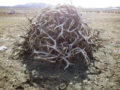 elk sheds