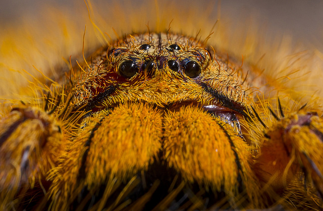 Eye-to-eye view of a David Bowie spider