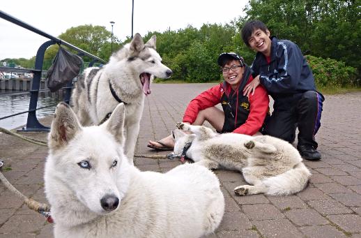 Jam and Lejon with friendly huskies
