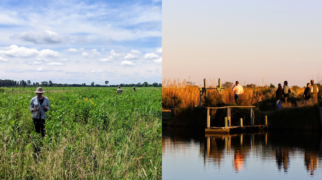 Restoration at Midewin National Tallgrass Prairie in Illinois; rice trunks maintain wetlands in the Lowcountry.