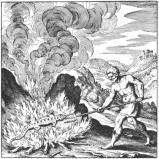 Eldsalamandern