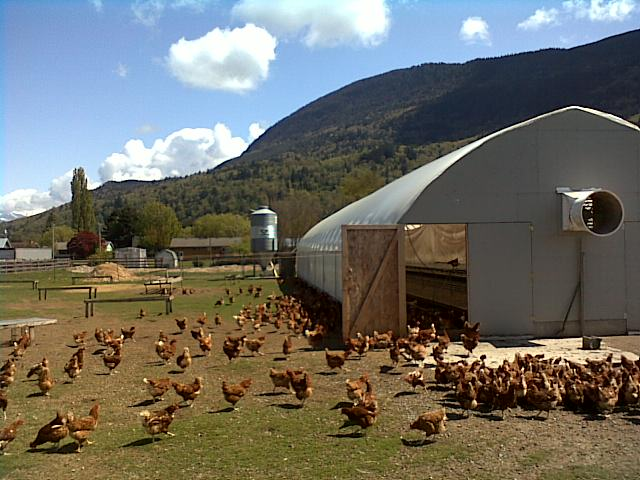 Rehoboth chicken barn & pasture.
