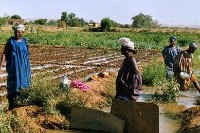 Women farmers in Senegal face challenges over land ownership. A recent workshop looked at how more equal land access could be achieved (Photo: vredeseilanden, Creative Commons, via Flickr)