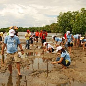 Mangroves being planted as part of a climate change adaptation strategy in the Philippines (Photo: Jessie F. Delos Reyes/USAID, Creative Commons via Flickr)