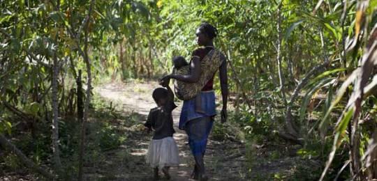 Meceburi Forest, near Nampula, Mozambique (Photo: Mike Goldwater)