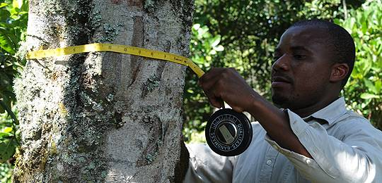 A forest ranger takes measurements of a tree at Megeni Kitasha in the Rombo District in Moshi, Tanzania (Photo: FAO/Simon Maina)
