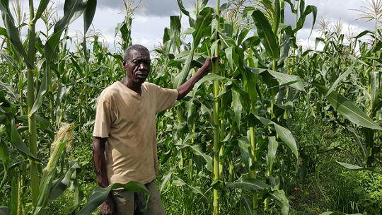 Photo: A Zambian farmer in his maize field. (Photo: Wesley Wakunuma)