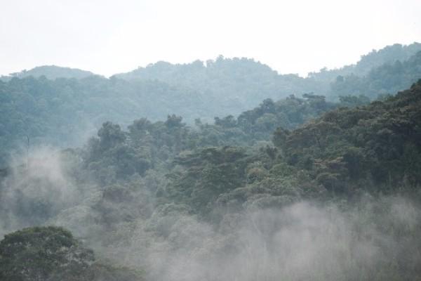 Photo: Mist over Bwindi Impenetrable National Park, Uganda
