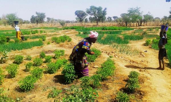 Photo: Planting in Karamani, Mali (Teresa Sarroca/IIED)