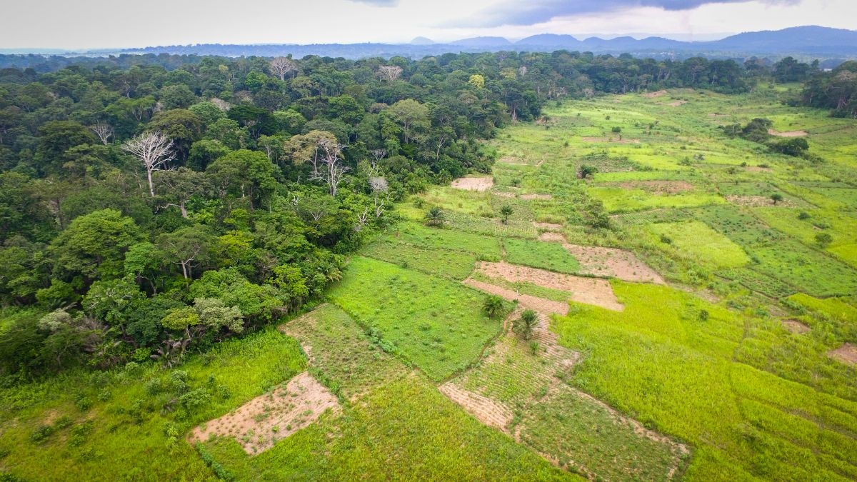 Aerial view of a transition forest area in Bokito, Cameroon (Credit: Mokhamad Edliadi/CIFOR/Creative Commons via Flickr BY-NC-ND 2.0)