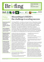Mozambique's REDD+: the challenge is scaling success