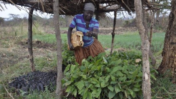 A farmer waters her tree nursery in Hoima, Uganda. CBA11 will focus on harnessing natural resources and ecosystems for climate change adaptation (Photo J. Recha, CCAFS/CGIAR, Creative Commons via Flickr)