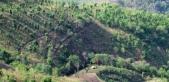 Smallholder forest-farm in Myanmar
