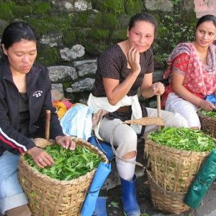 Tea pickers at a Darjeeling tea processing unit (shankar s, via Flickr, CC BY 2.0)