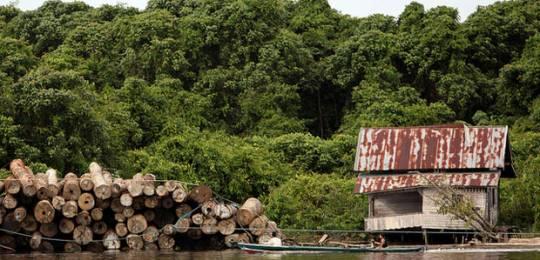 Deforestation in Kalimantan, Indonesia