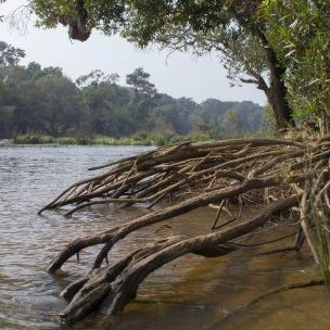 Mangroves line India's Kaveri river. Mangrove forests can protect coastal areas from erosion, support fish stocks and store carbon dioxide (Photo: Avinash Bhat, Creative Commons via Flickr)