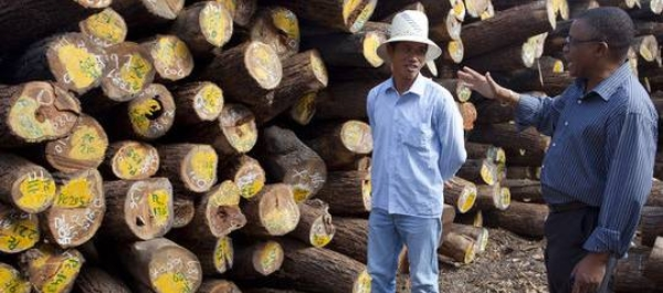 The timber depot of Green Timber, a Chinese-owned timber concession that are licensed to operate in Nampula and Zambezia provinces, Mozambique (Photo: Mike Goldwater)