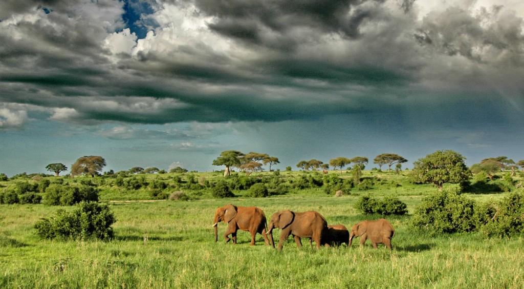 Olifanten Tanzania