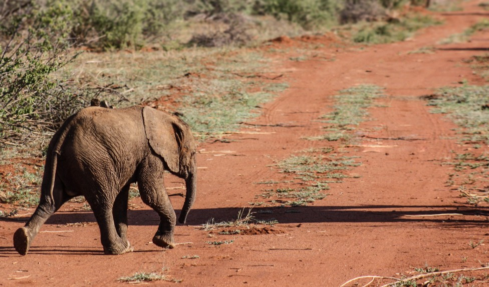 Baby olifant in Zuid-Afrika