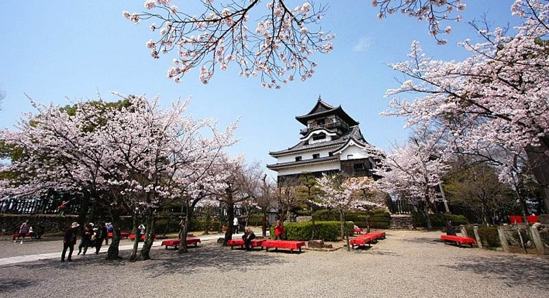 Kersenbloesem Japan