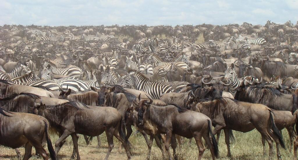 Migratie Tanzania