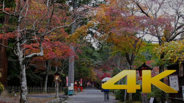 Kyoto Oharano Shrine - 大原野神社 - 4K Ultra HD