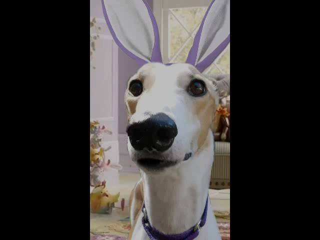 Happy Bunny Day from Lilly