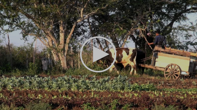 Organic Farming Flourishes in Cuba, But Can It Survive Entry of U.S. Agribusiness?