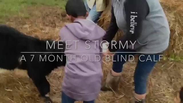 Rowdy Girl Sanctuary- Stormy